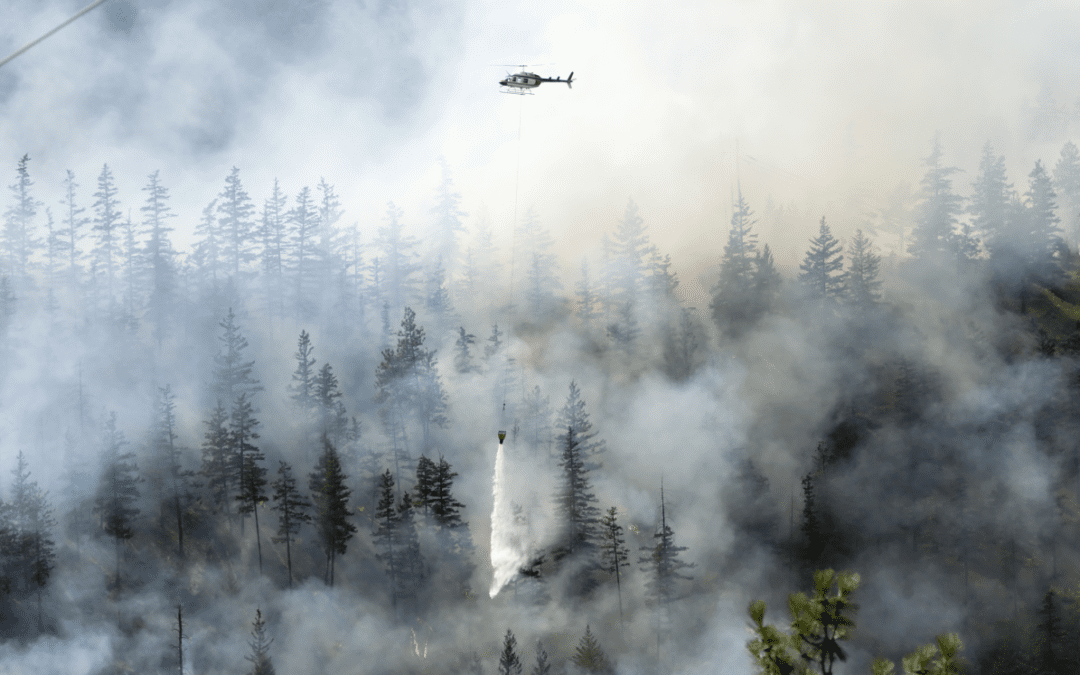 Your Guide for Dealing with Wildfires