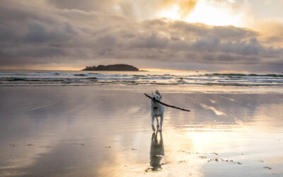 'Where to Hit List' of the Best Beaches in B.C.