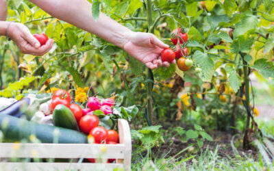 Has Your Garden Finished Its Growing Season?
